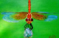 3727 – Dragonfly #9 – Common Pond Dragonfly