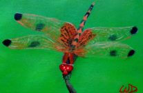 3729 Dragonfly #11 – Calico Pennant